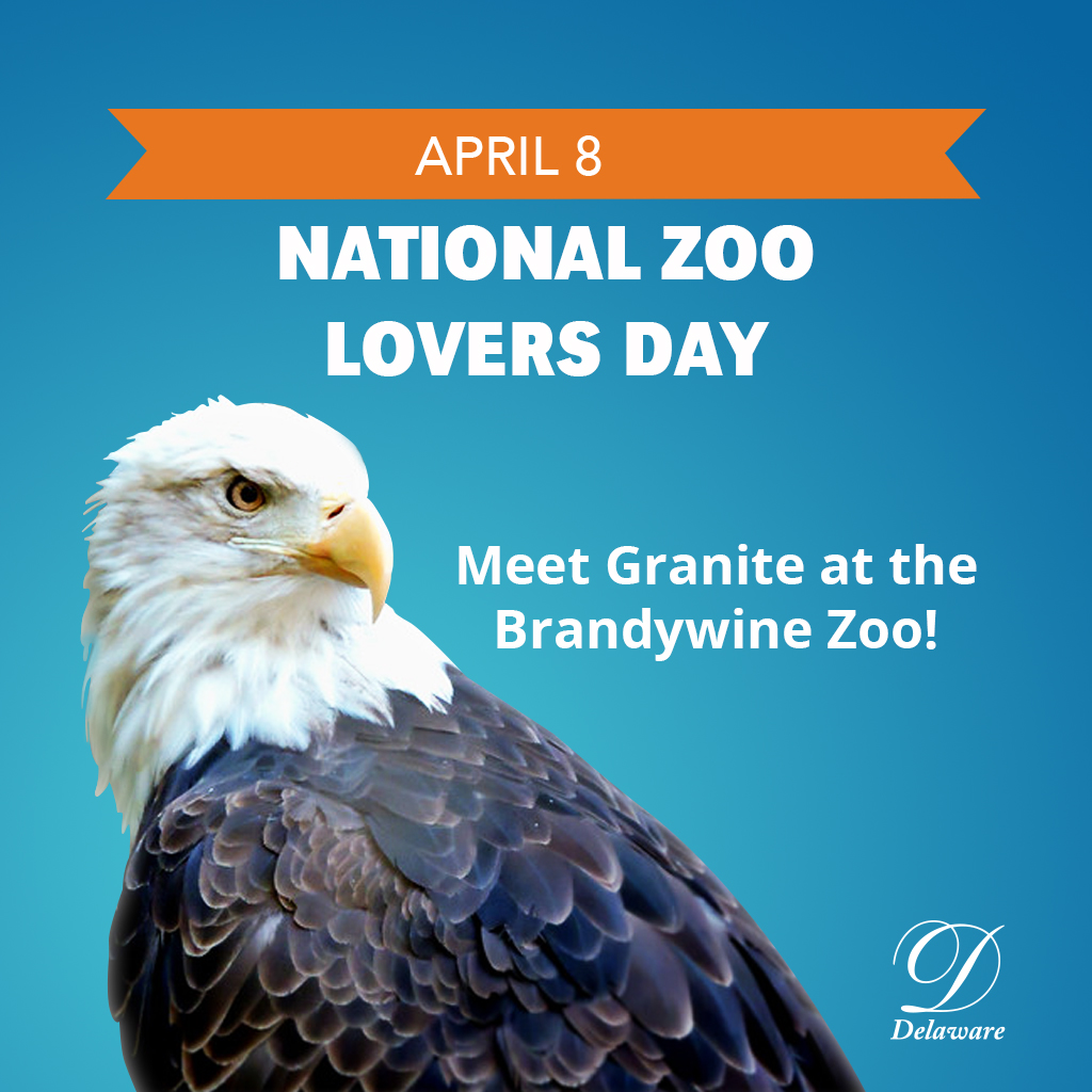 Image of a bald eagle for National Zoo Lovers Day